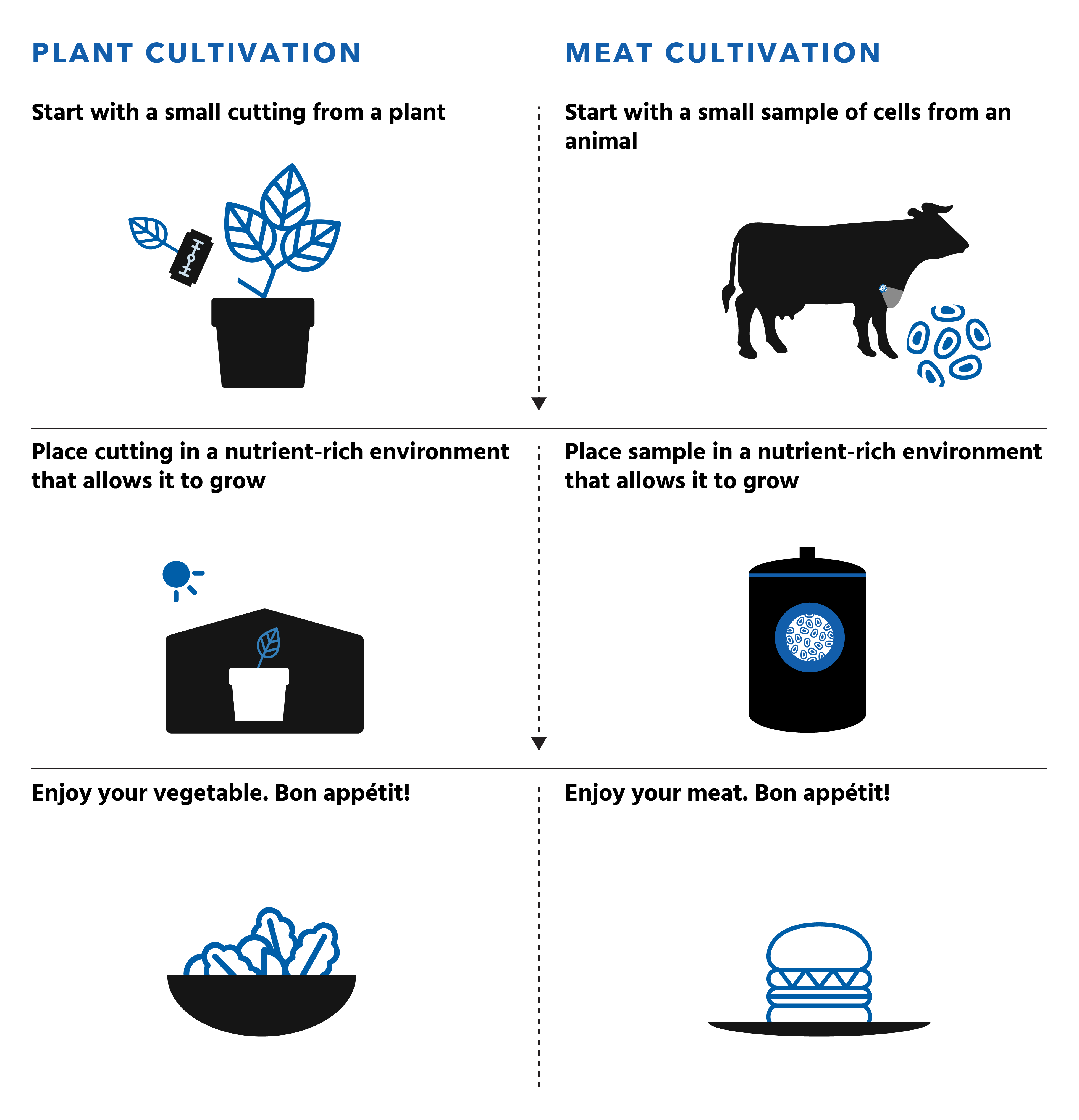 Free to use graphic illustrating how meat cultivation parallels natural growth
