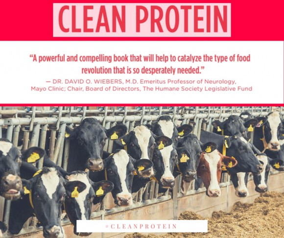 Clean protein poster with cows