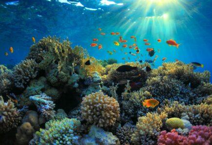 Fish around coral reef