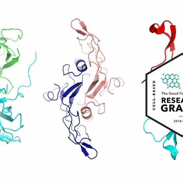 Https://gfi. Org/wp content/uploads/2019/07/crg protein folding growth factors 2