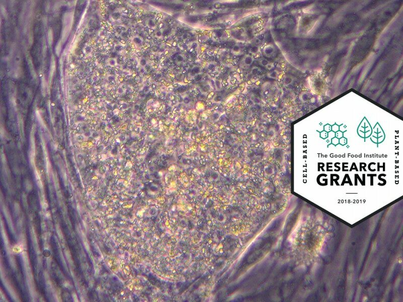 Https://gfi. Org/wp content/uploads/2019/07/competitive research grant gareth cell lines