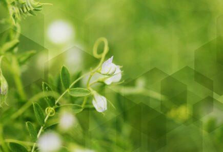 Hexagon blurs over plants