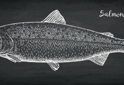 Https://gfi. Org/wp content/uploads/2020/05/salmon blackboard