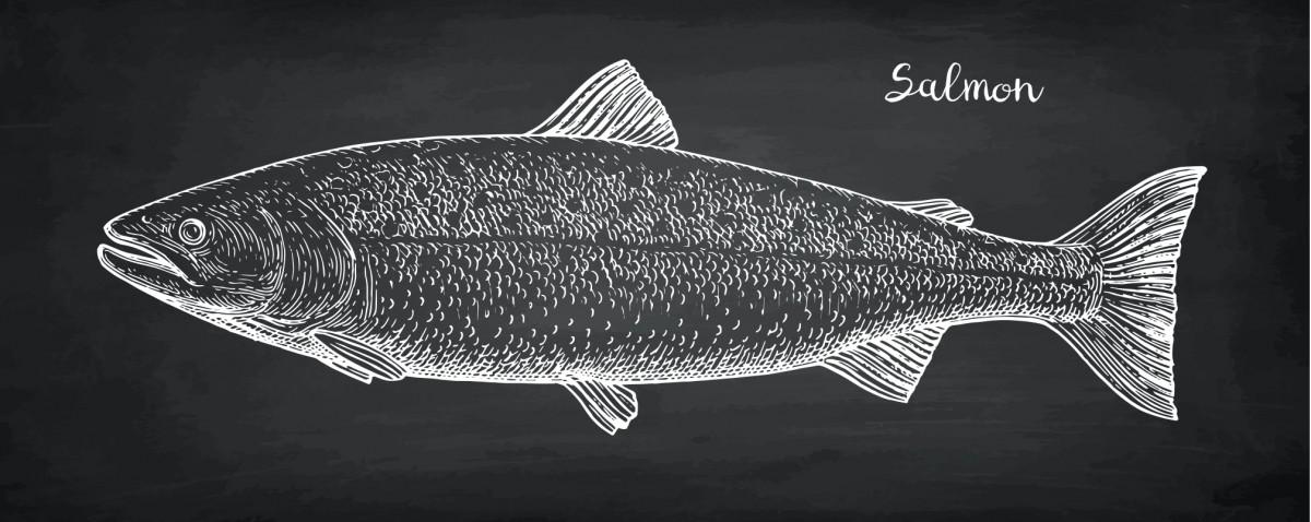 Salmon diagram