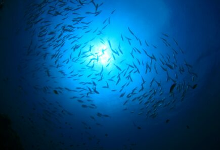 School of fish with sun streaks coming through water