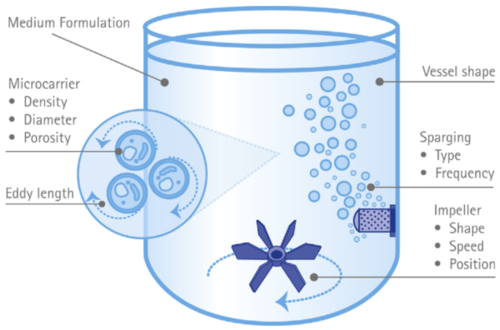Diagram of a stirred tank bioreactor