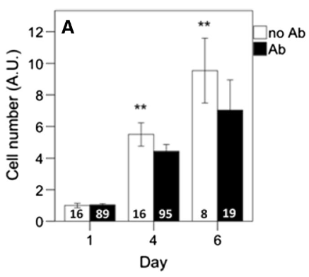 Figure showing growth rates of bovine myoblasts with and without antibiotics