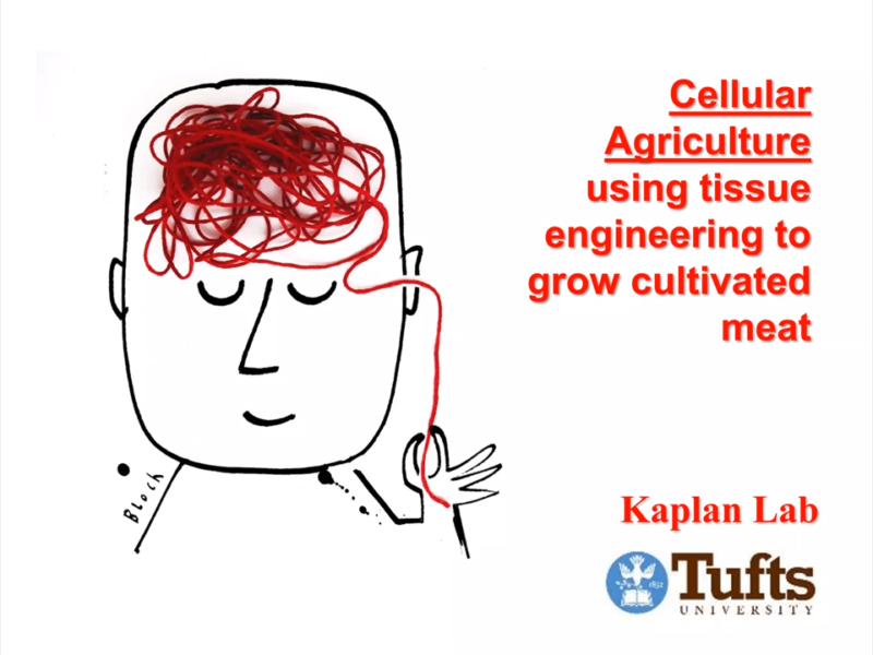 Dr. David Kaplan discusses using tissue engineering to grow cultivated meat in our Science of Alt Protein seminar.