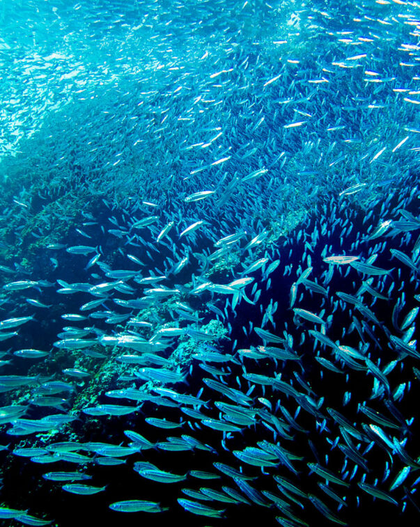 A school of fish swimming along a reef underwater