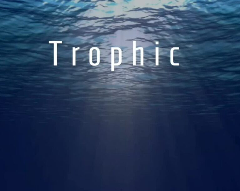 Trophic company name overlaid on image of sun rays shining through the water