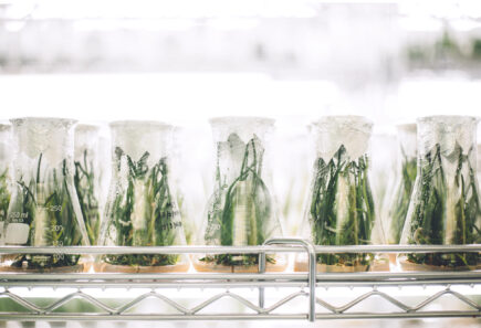 Plants growing in erlenmeyer flasks