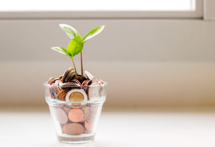 Young plant growing from coins representing funding and growth