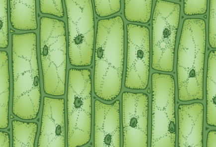 Plant cells under a microscope, representing scaffolding for cultured meat