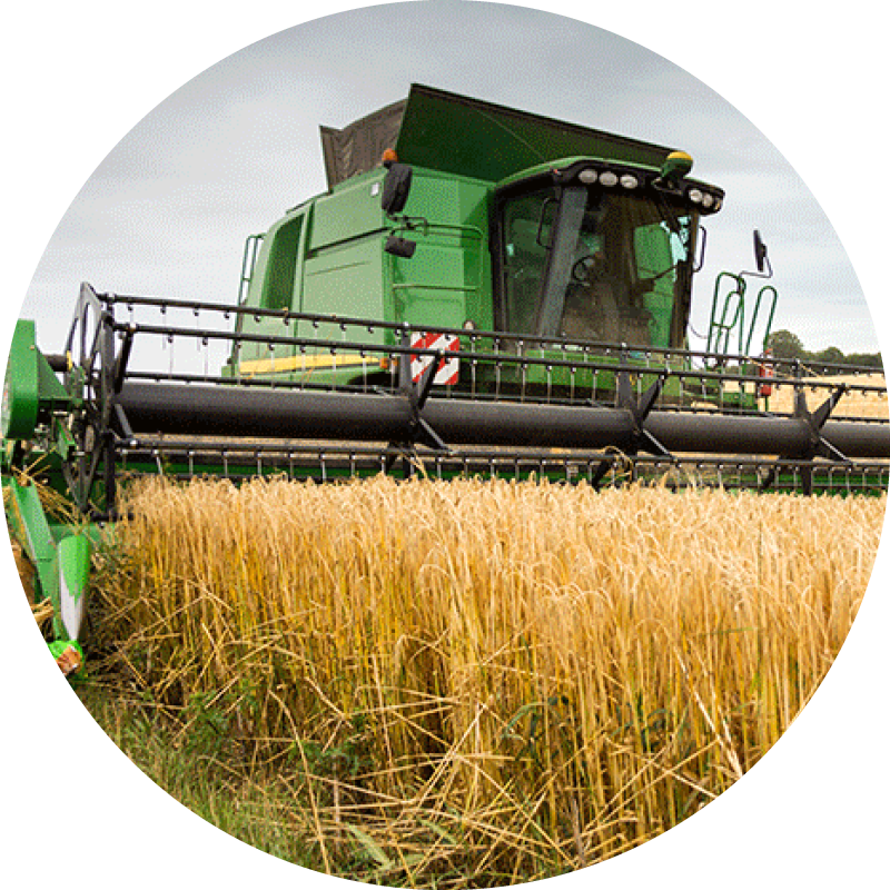 Combine harvester at work in a field of wheat