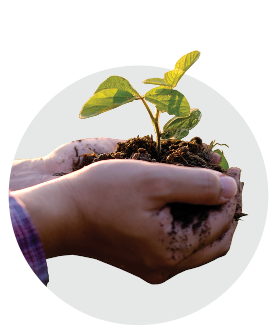 Hands holding a seedling representing support and growth