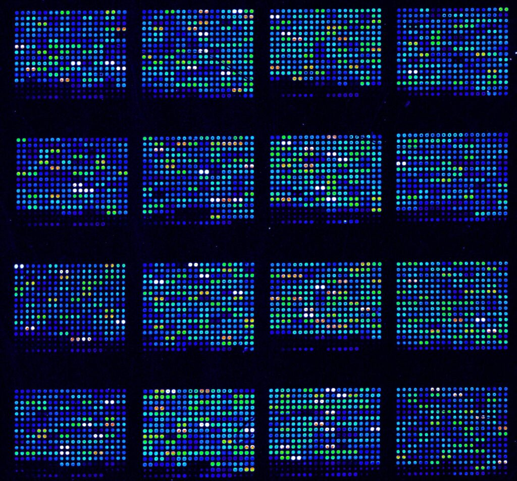 DNA microarray used in biological research