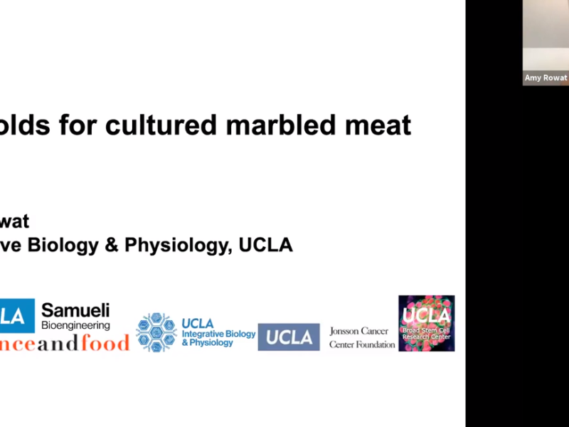 Dr. Amy Rowat presents her research on marbling cultivated meat with hydrogel scaffolds