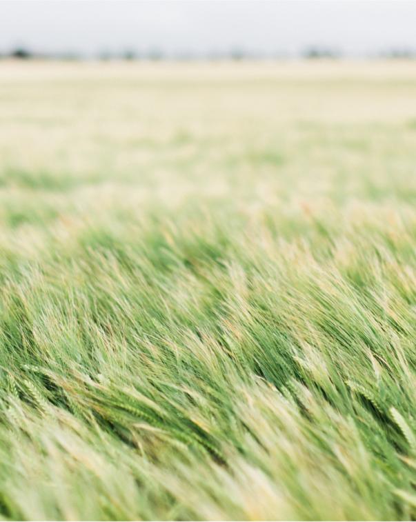 Farm field of plant crops