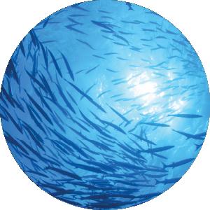 School of fish underwater with sun shining through