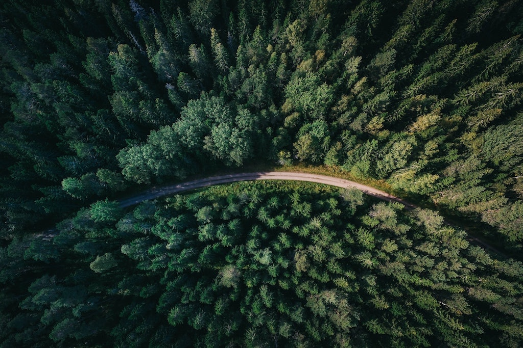 Overhead view of road in forest