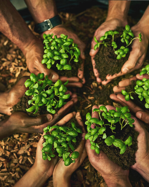 People in a circle holding soil and seedlings in their cupped hands, top view