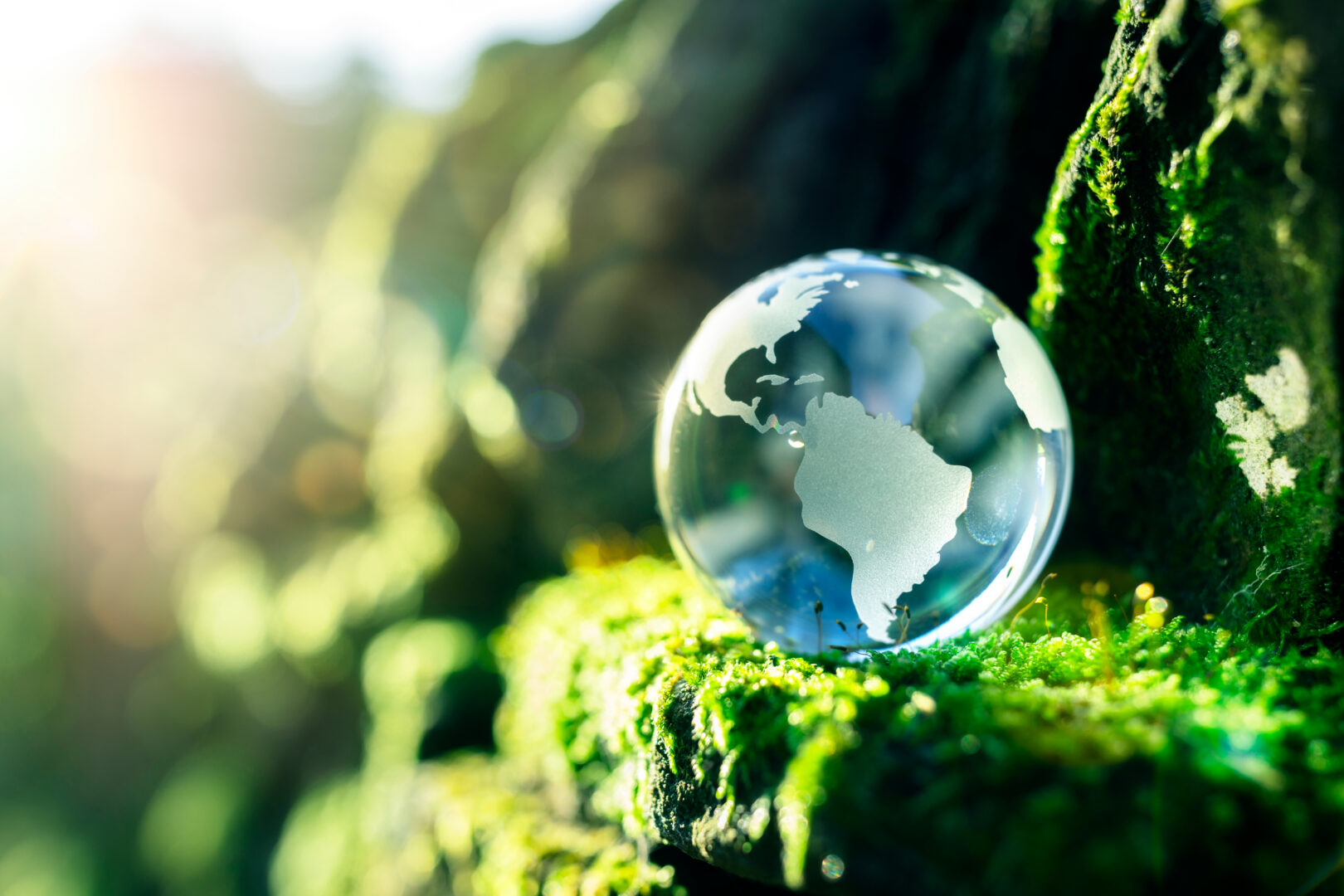 Earth globe on a ledge of greenery in a forest