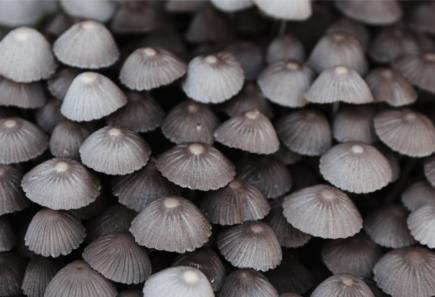 Group of grey mushrooms