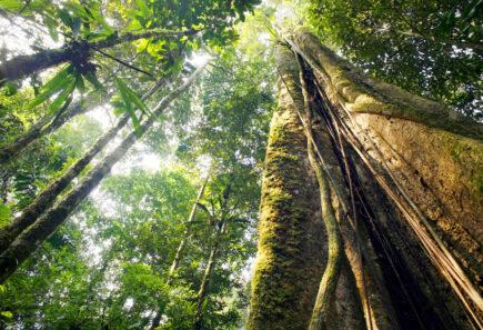 Amazon rainforest_climate change_biodiversity