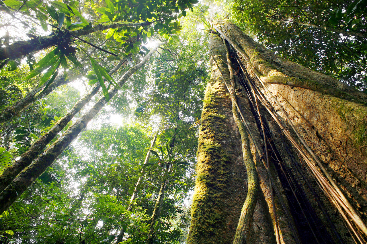 Amazon rainforest_climate change_biodiversity_impact investing