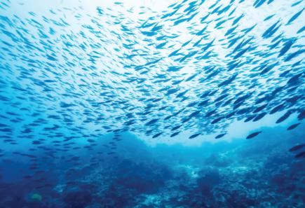 School of fish in ocean water
