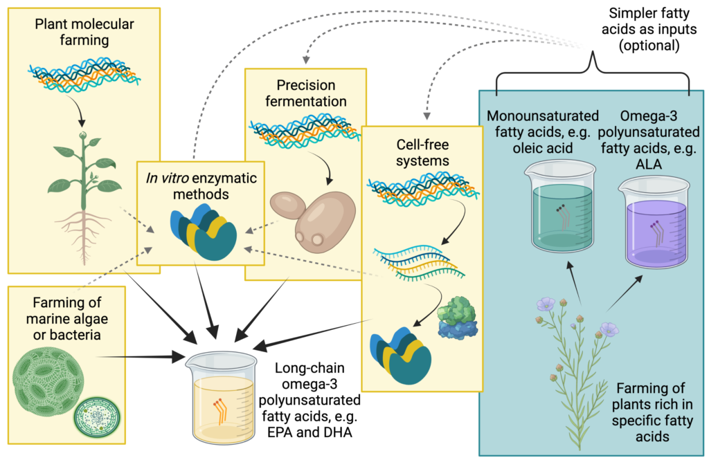 Diagram of possible methods for long-chain omega-3 fatty acid production. The methods shown are farming of marine algae or bacteria, plant molecular farming, precision fermentation, cell-free systems, and in vitro enzymatic methods. The latter may use purified enzymes created using any of the other four methods. Farming of plants rich in other fatty acids may optionally be used to provide inputs for precision fermentation, cell-free systems, or in vitro enzymatic methods.